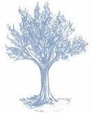 cedar-logo-blue-tree-only-h163